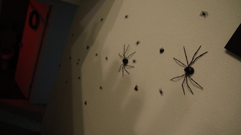 Багато маленьких павуків: сонники відомих авторів, що пояснюють, до чого сняться невеликі і великі особини