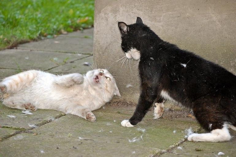До чого сниться біла кішка: думки різних сонників, тлумачення для дівчат, чоловіків і заміжніх жінок