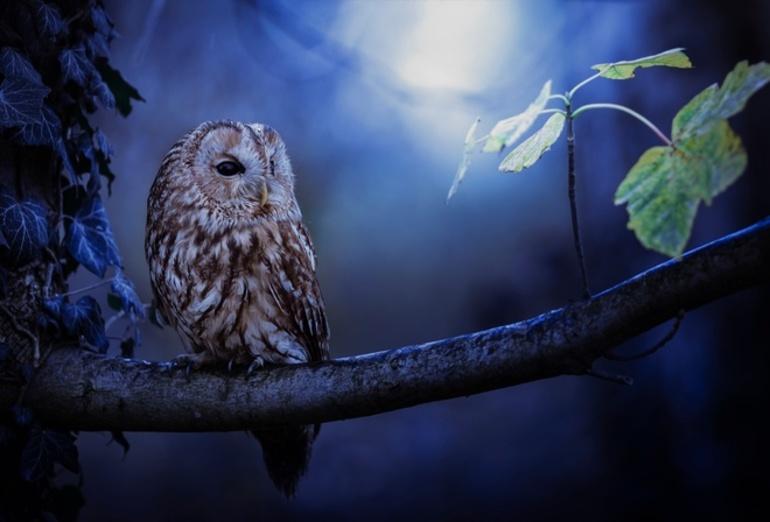 До чого сниться біла сова і чорний птах: тлумачення по соннику Міллера