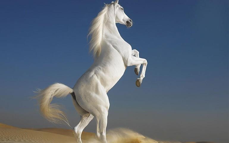 До чого сниться білий кінь: купати, годувати і скакати на ній, тлумачення по сонникам для чоловіків і жінок