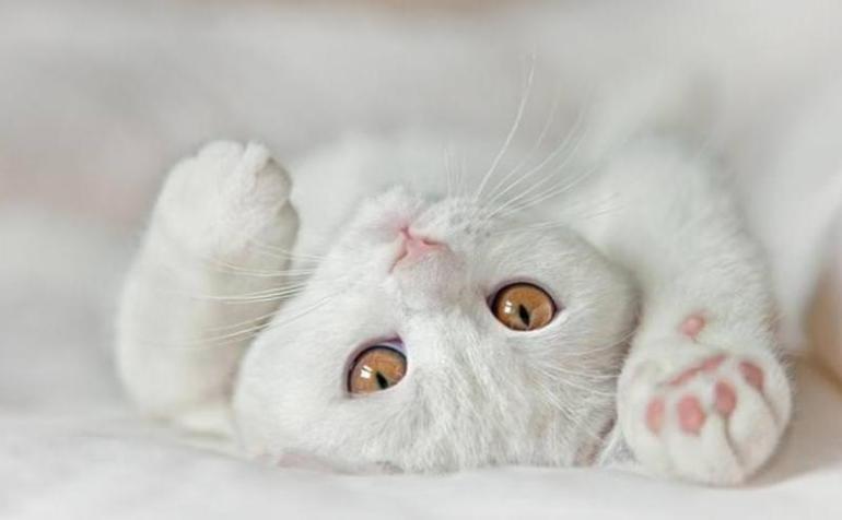 До чого сниться білий кошеня: тлумачення сну для жінки і чоловіки, інтерпретації багатьох сонників
