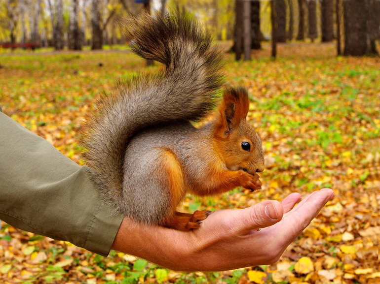 До чого сниться білка: тлумачення сонників, розшифровка деталей, що означають руді ручні тварини на дереві
