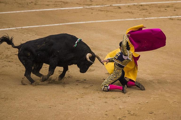 До чого сниться бик: жінці та чоловікові, великий і розлючений, тікати від тварини