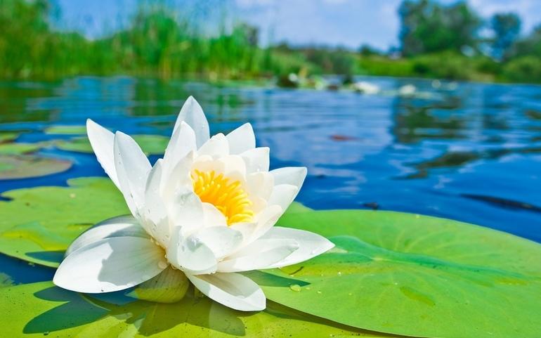 До чого сниться болото: тлумачення сонників, що означає бачити і ходити по трясовині, потонути в багні