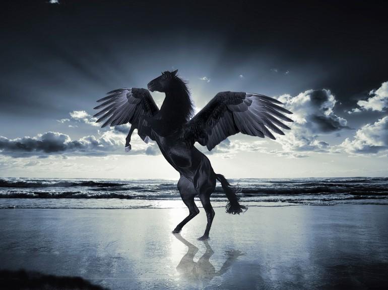 До чого сниться чорна кінь: тлумачення снів по сонникам, інтерпретація для чоловіків і жінок