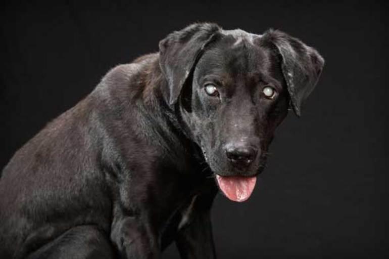 До чого сниться чорна собака: тлумачення за сонником, значення для чоловіків і жінок