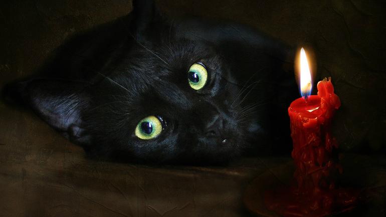 До чого сниться чорний кіт: тлумачення по сонникам, значення сну для чоловіків і жінок