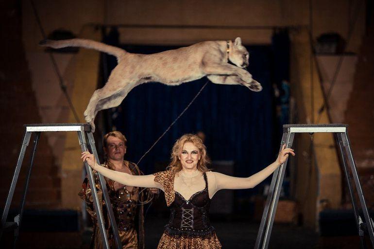 До чого сниться цирк: трактування снів про циркових виставах за різними сонникам