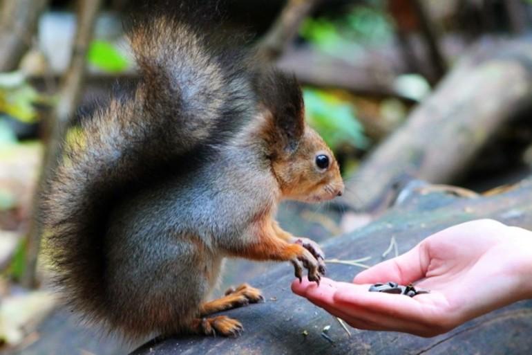 До чого сниться годувати людини або тварин: трактування годування їжею по різним сонникам