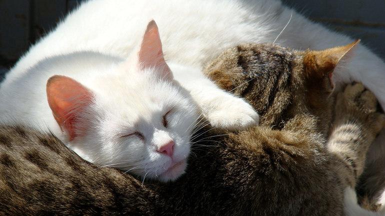 До чого сниться хвора кішка: тлумачення для жінки і чоловіки, сон про кошеня, популярні книги пророцтв