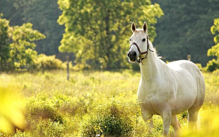 До чого сниться кінь: особливості образу коня, тлумачення в різних сонники для чоловіків і жінок