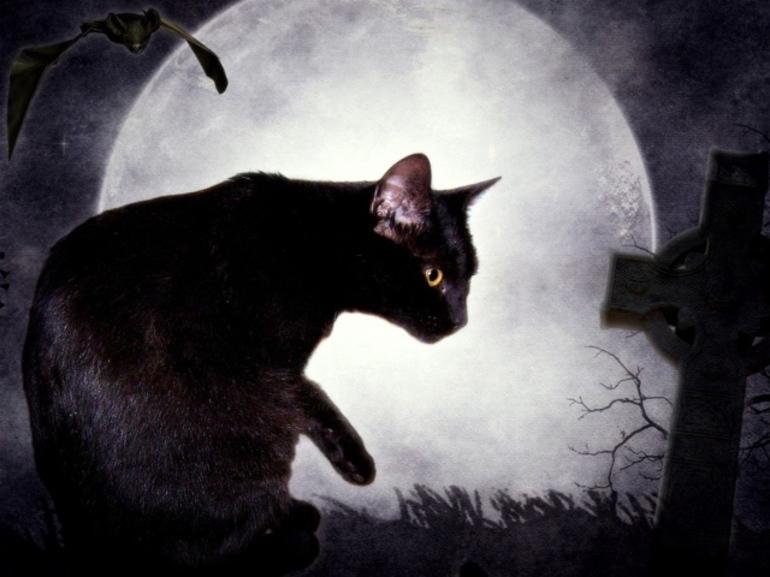 До чого сниться кішка: жінці чи чоловікові, свійська чи дика, тримати в руках тварина