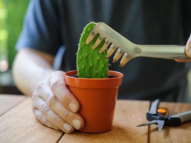 До чого сниться кактус: загальні і детальні тлумачення сну з квітучою рослиною в горщику з популярним сонникам