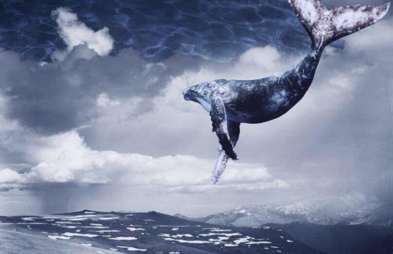 До чого сниться кит: великий або маленький, в океані чи на суші, його значення сонники для жінки і чоловіки