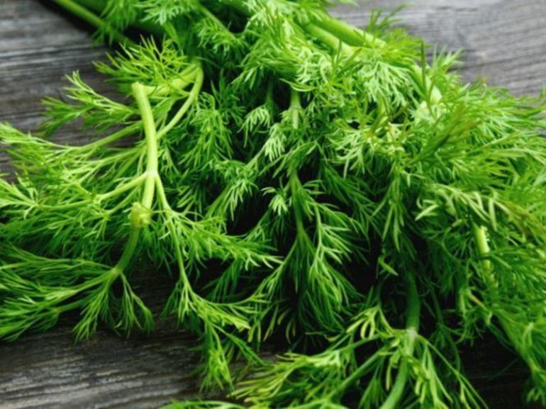 До чого сниться кріп: тлумачення грядок зеленої петрушки та інших культур по дням тижня, сезонам і сонникам