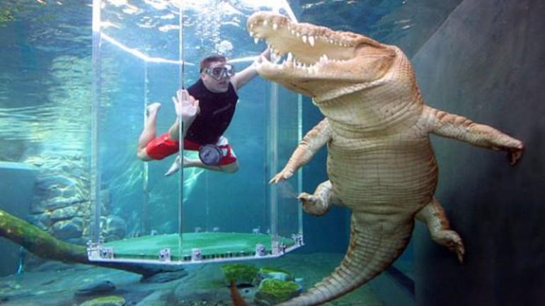 До чого сниться крокодил: напад або годування з рук в сні, що означає білий алігатор для дівчини,