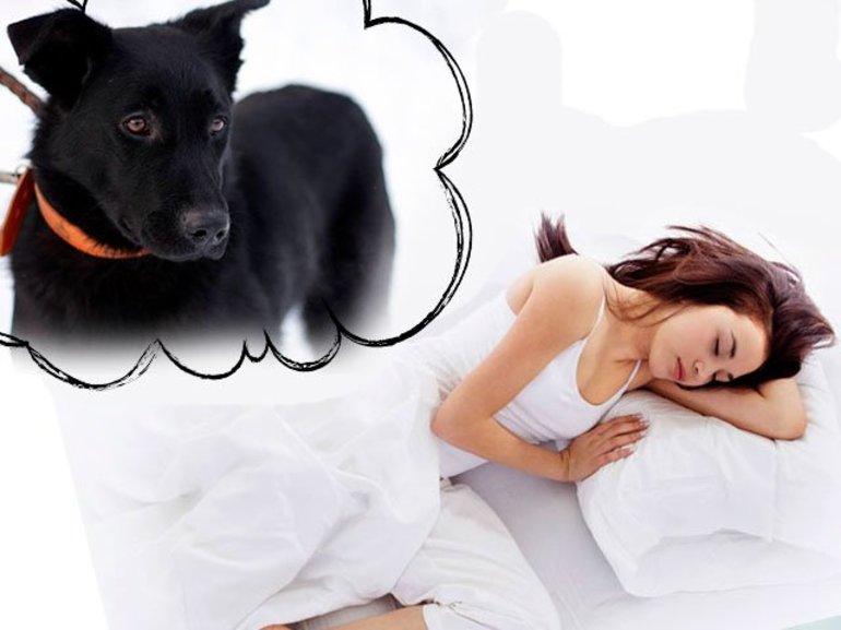 До чого сниться купівля собаки: значення сонники сну, в якому довелося купувати дорослого собаку або цуценя