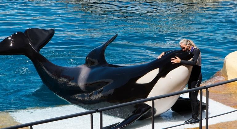До чого сниться ластівка: значення сну, в якому приснився кит у морі або басейні, тлумачення різних сонників