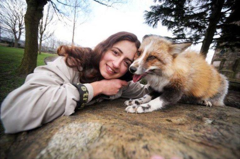 До чого сниться лисиця: значення по сонникам, тлумачення Міллера, сюжет про рудого лисенка