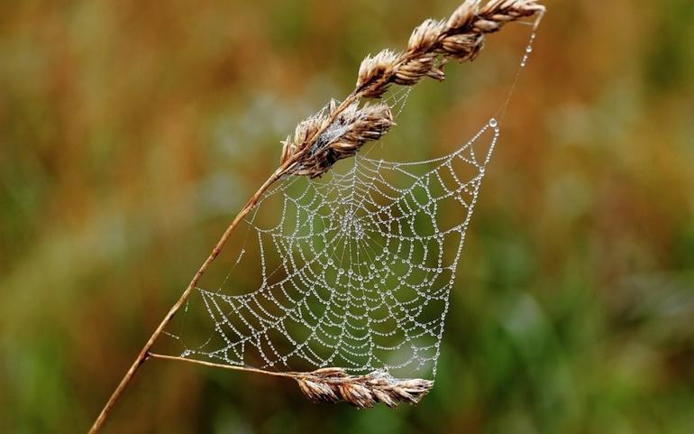 До чого сниться павутина: бачити в будинку і на вулиці, на стелі і стінах, тлумачення по сонникам
