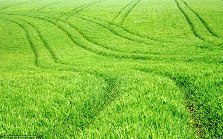 До чого сниться поле: значення сну, де приснилося зорана зелена нива, трактування випалених ділянок