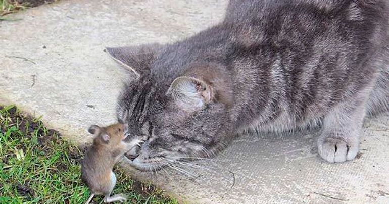 До чого сниться помер кіт: тварина приснилося господареві живим і здоровим або знову помирає в сновидінні