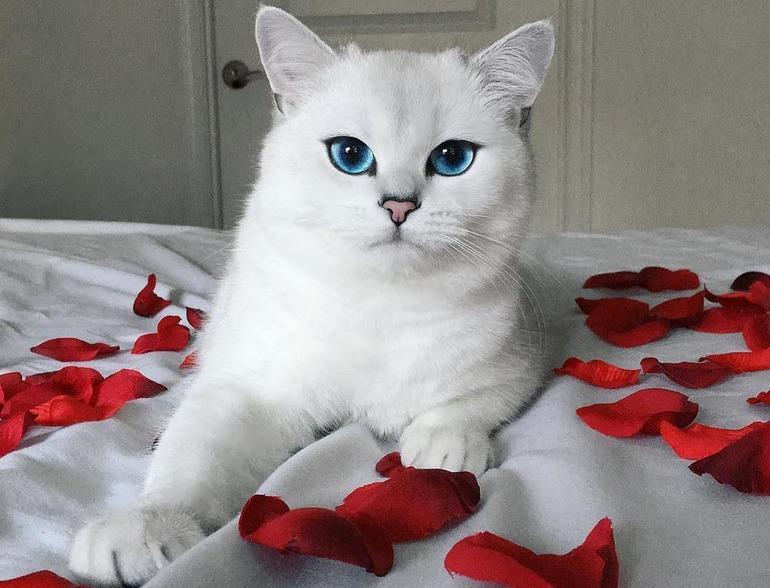 До чого сниться пухнастий білий кіт: тлумачення сну в популярних сонники, значення для жінок