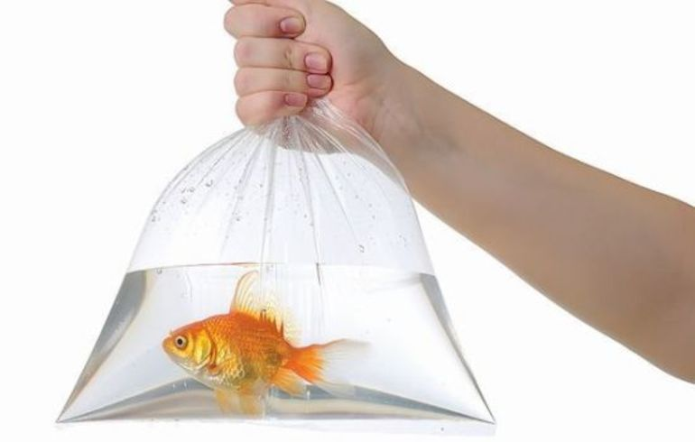 До чого сниться риба чоловікові: сюжети про рибалку, дії хлопця, сонник Міллера