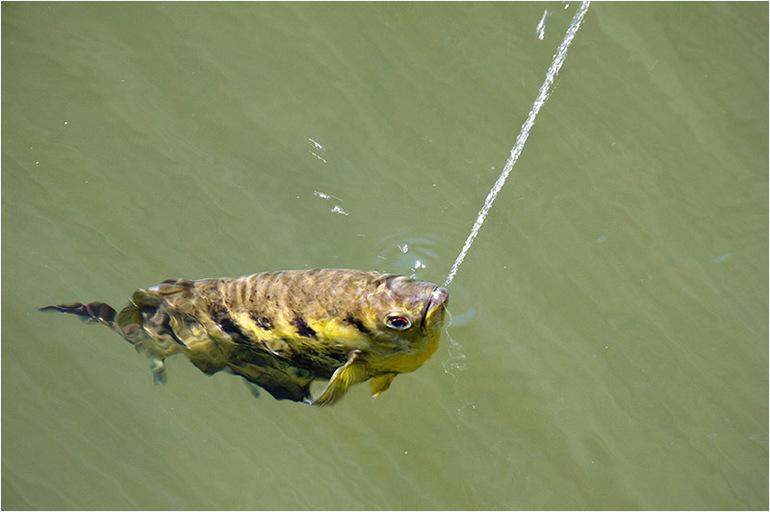 До чого сниться риба: тлумачення снів, в яких жінці чи чоловікові наснився морські мешканці