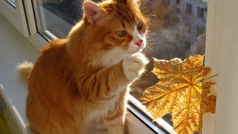 До чого сниться рудий кіт з різних сонникам: тлумачення
