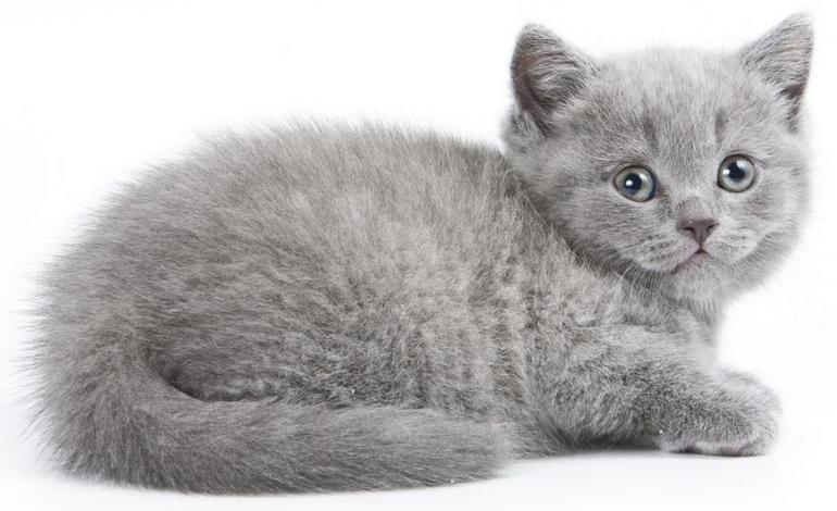 До чого сниться сіре кошеня жінкам і чоловікам: бачити в сні маленького котика, взяти його на руки