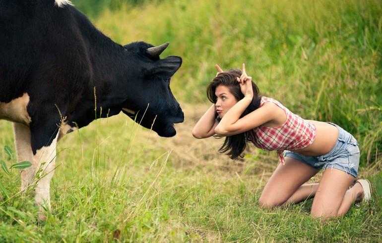 До чого сниться стадо корів: особливості бачення для жінок і чоловіків, тлумачення в різних сонники