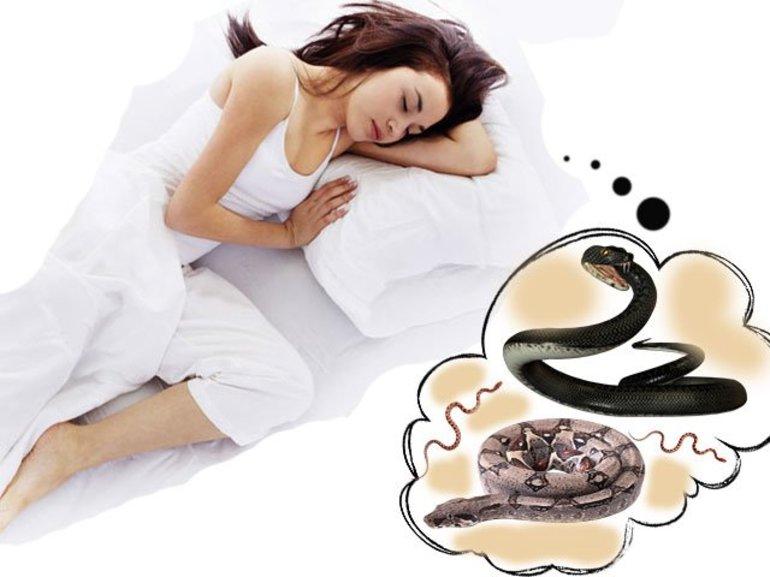 До чого сниться удав: бачити в сні, загальне тлумачення сонників і психологів
