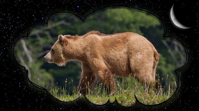 До чого сниться ведмедиця з ведмежатами: що очікувати чоловікові і жінці після побаченого сну