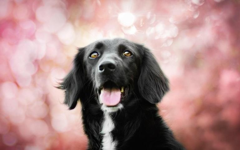 До чого сниться велика собака: тлумачення сновидінь з добрим і злим псом для чоловіків і жінок