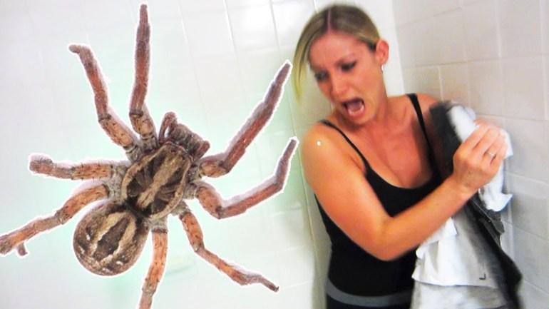 До чого сниться великий чорний павук: розмір та дії величезного волохатого комахи уві сні
