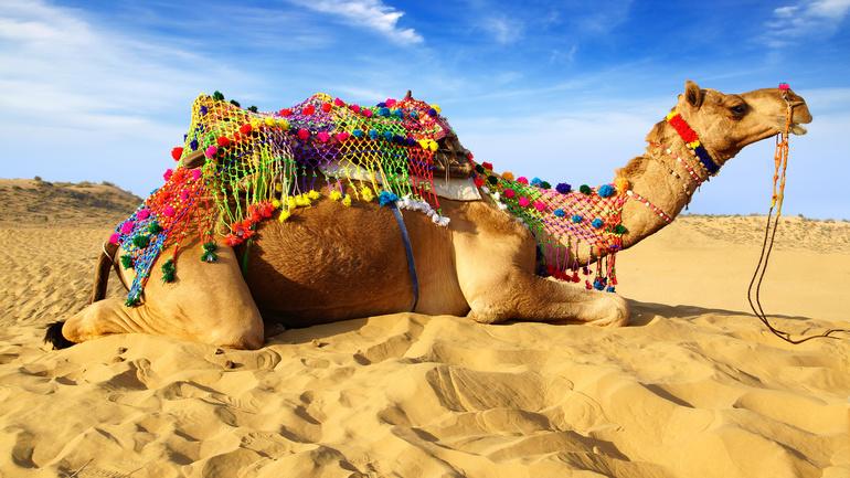 До чого сниться верблюд: значення сну для дівчини, жінки і чоловіки, тлумачення образу за різними сонникам