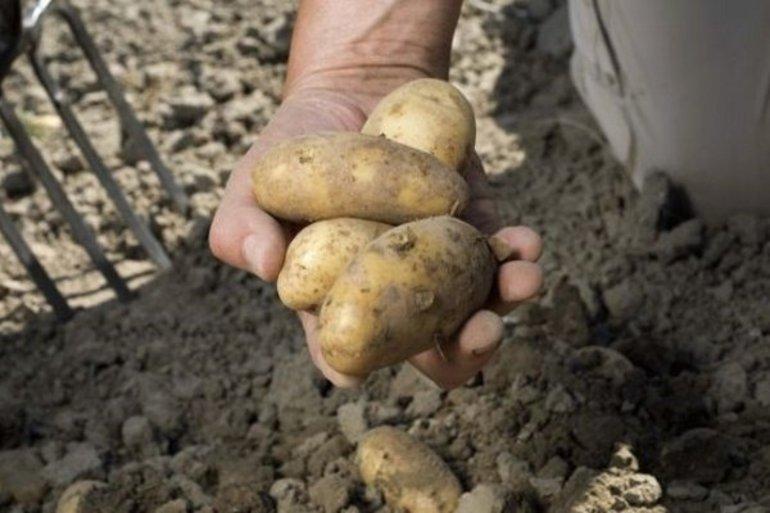 До чого сниться збирати картоплю руками: значимість сну про город і визначення його таємного сенсу