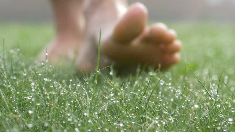 До чого сниться зелена трава: значення сну, в якому наснилося ходити по газону, збирати рослини руками