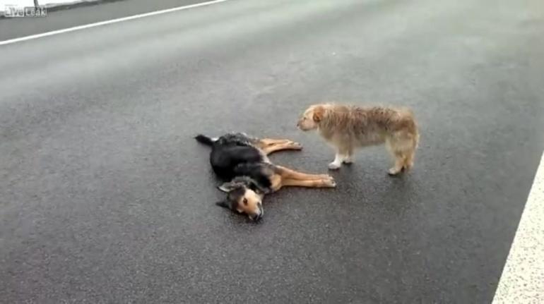 До чого сниться зграя злих собак: тлумачення по сонникам для чоловіків і жінок, якщо приснилося, що пси нападають