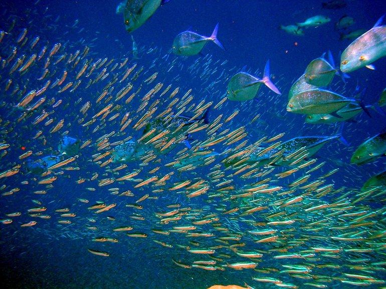 До чого сниться жива риба: значення плаваючої в чистій воді рибки, дівчата і чоловіки
