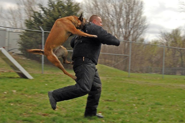 До чого сниться злий собака: тлумачення сонників, тварина намагається напасти, бачити пса на ланцюгу