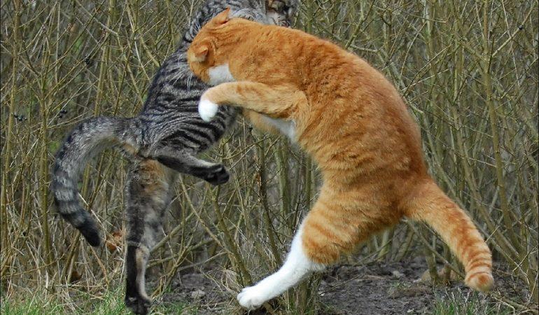 До чого сняться кішки чи коти що б'ються: тлумачення побаченої уві сні бійки між тваринами