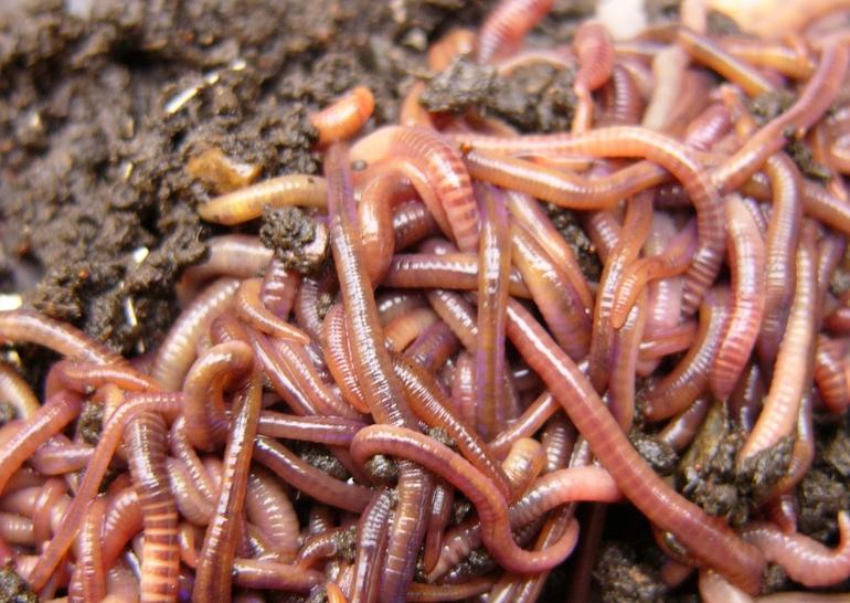 До чого сняться черв'яки по соннику: загальний опис, причини появи на тілі людини, стать і емоції сновидця