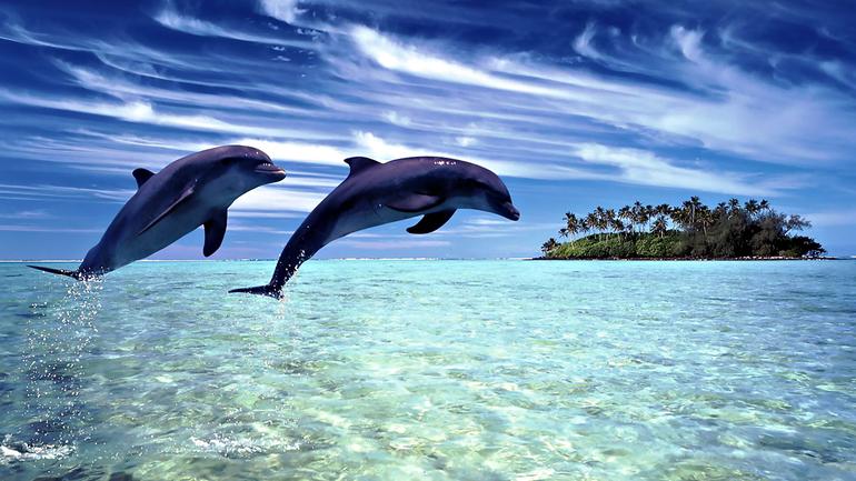 До чого сняться дельфіни: тлумачення приснився морських мешканців різними сониками, що означає зграя