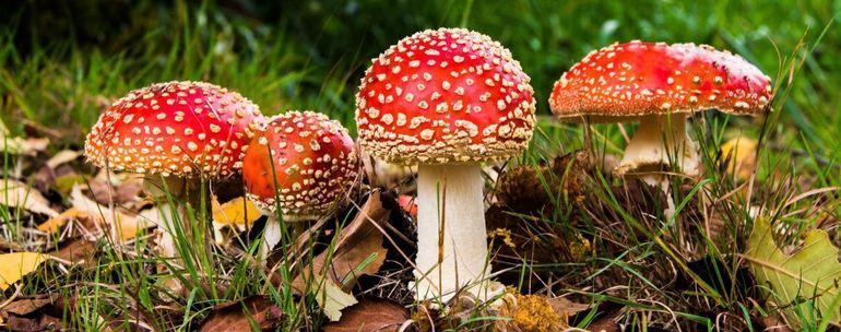 До чого сняться гриби: значення збору для чоловіків і жінок, тлумачення по соннику Фрейда, Лоффа і Міллера