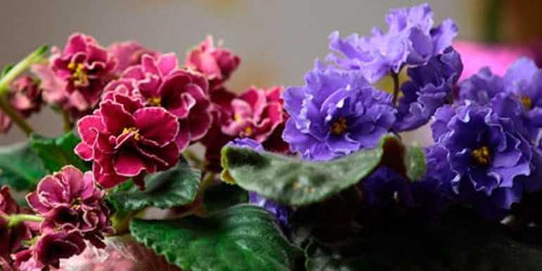 До чого сняться кімнатні квіти: зелені і зів'ялі домашні рослини в різних сонники