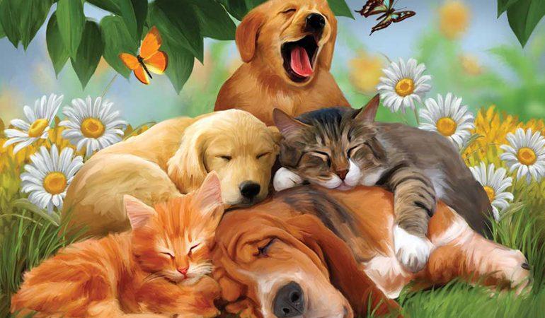 До чого сняться кішки і собаки: різні трактування, що означає побачити багато тварин разом, значення соннику