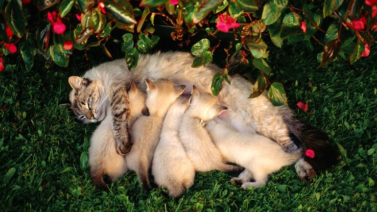 До чого сняться кішки та кошенята: основні тлумачення сонників, особливості значення для чоловіка і жінки
