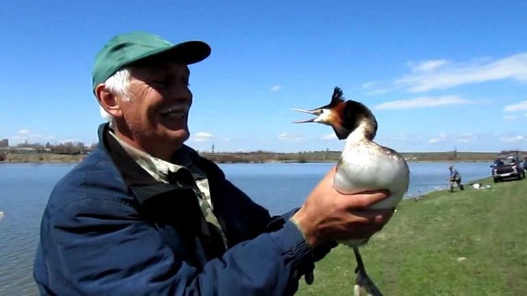 До чого сняться качки: живі і мертві, на воді і в повітрі, що означає по соннику полювати і ловити птаха